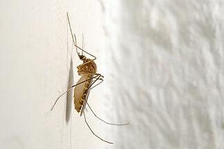 Wohnraumlüftung bietet effektiven Schutz vor Insekten
